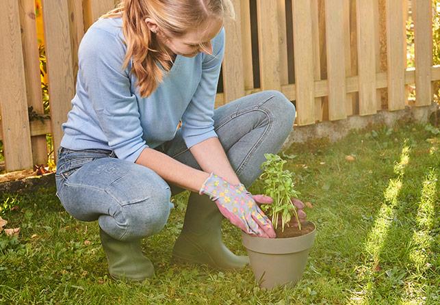 Grow Garden fal